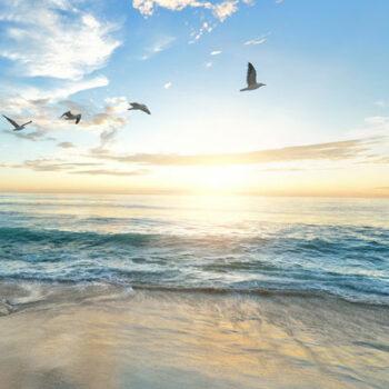 Geführte Meditation: Seelenvogel