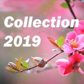 Meditation music from Sri Chinmoy's students 2019